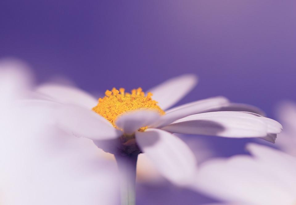 Flower, Blossom, Bloom, Plant, Close, Macro, Nature