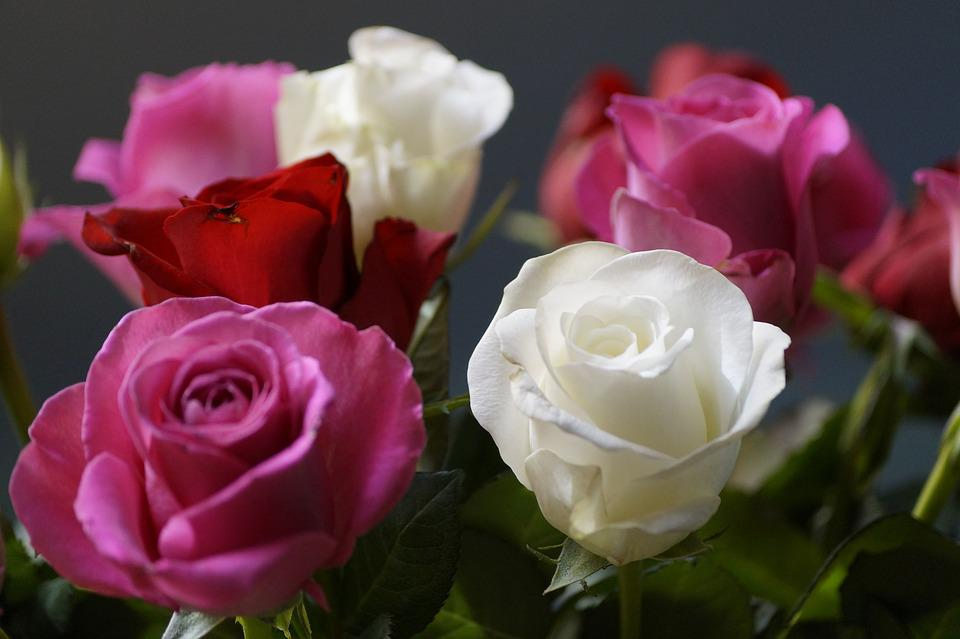 Roses, Bouquet, Pink, White, Close