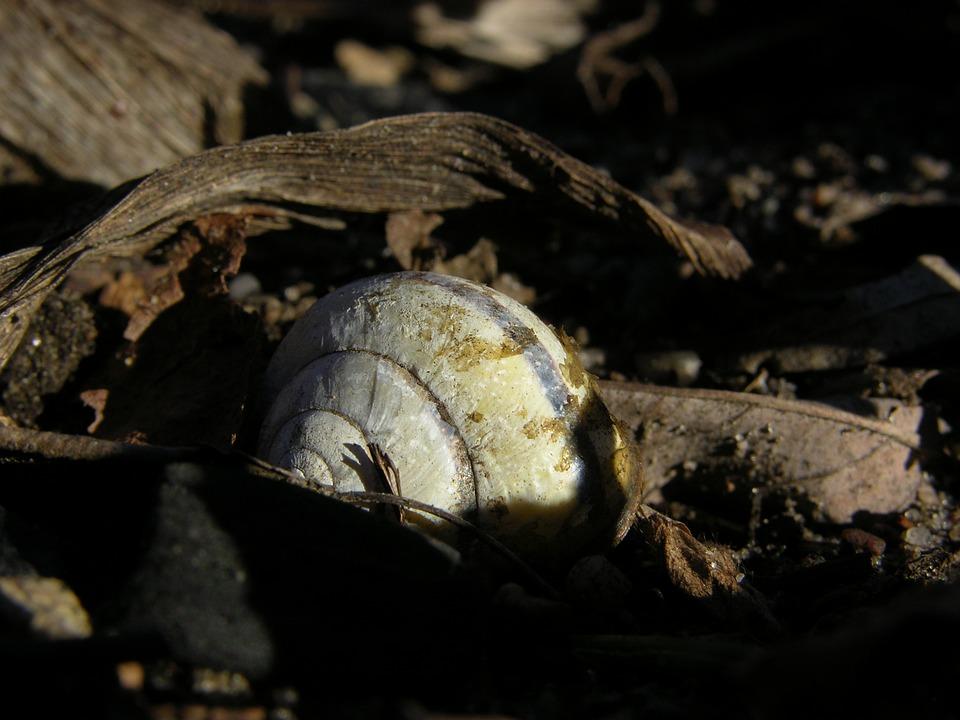 Shell, Old Leaves, Sun, Leaf, Garden, Snail, Close