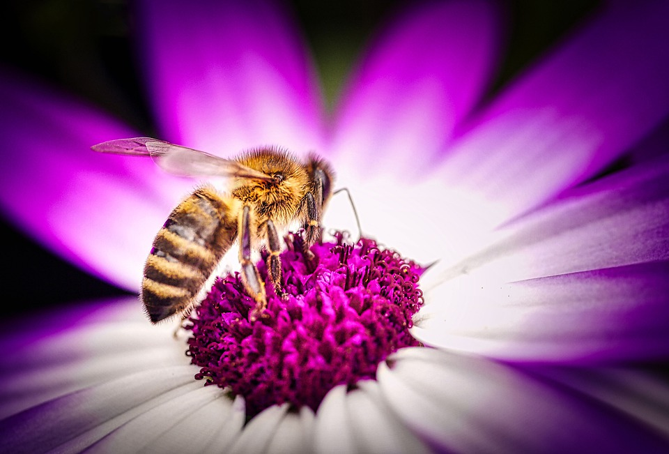 Bee, Honey, Insect, Nature, Close Up, Honey Bee