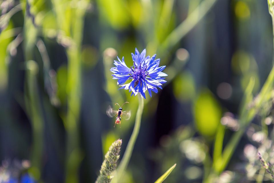 Insect, Flower, Flight, Nature, Blue, Summer, Close Up