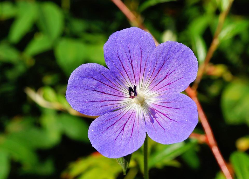 Flower, Blossom, Bloom, Blue, Close Up, Flora