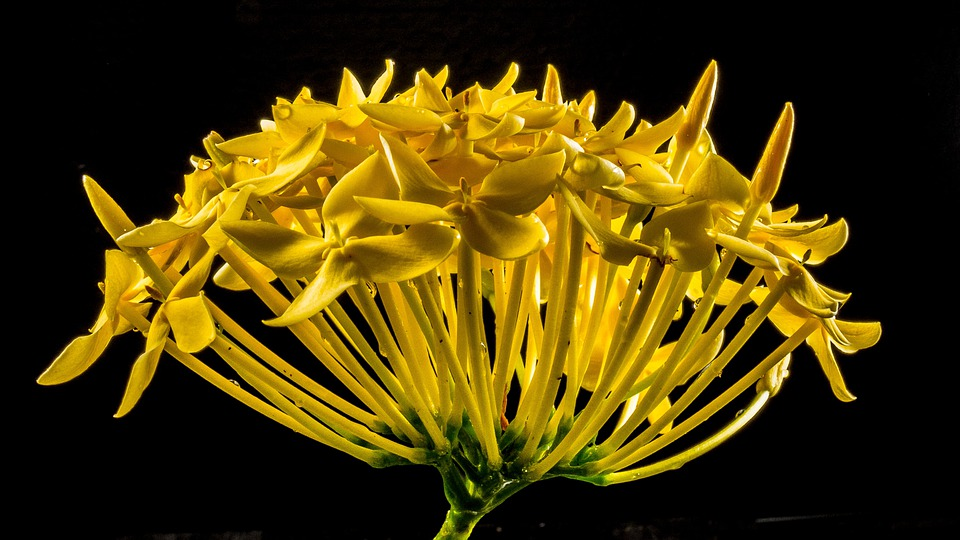 Blossom, Bloom, Flower, Yellow, Close Up