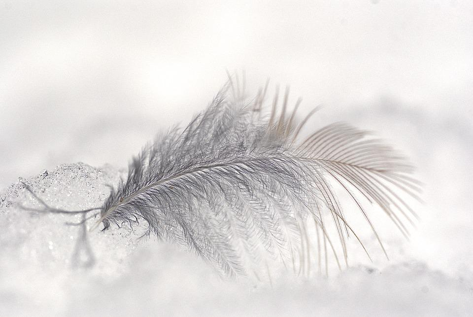 Feather, Macro, Ease, Close Up, Nature