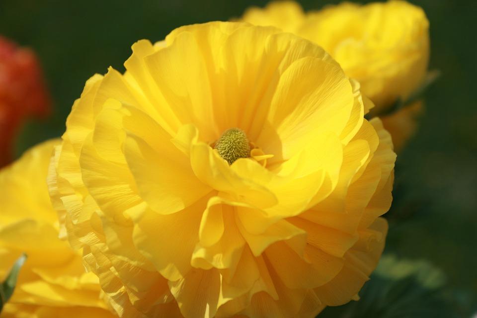 Flower, Macro, Close Up, Yellow