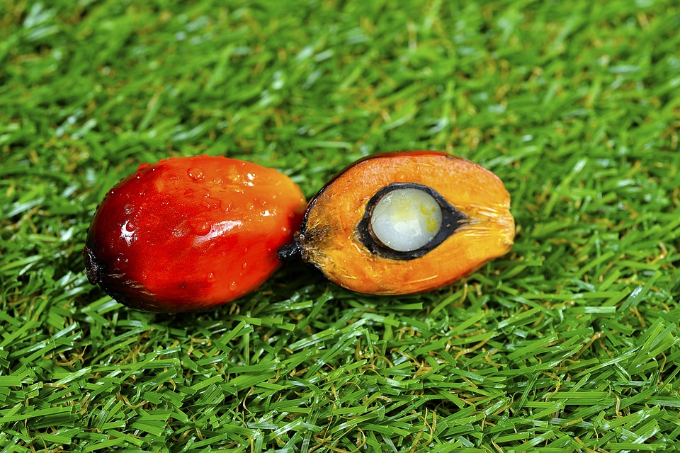 Close Up Of Fresh Palm Oil Fruits, Selective Focus