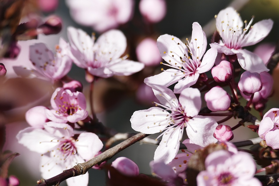 Spring, Flowers, Pink, Close Up, Beauty, Garden, Plant