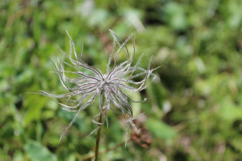 Nature, Plant, Summer, Grass, Close Up, Flower, Garden
