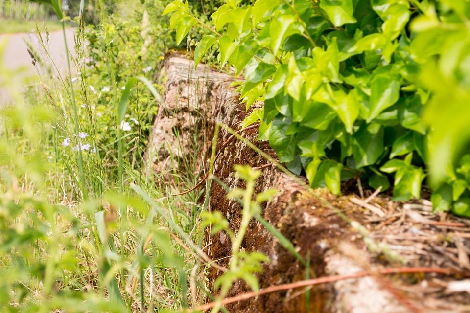 Wall, Moss, Green, Close Up, Flora, Nature, Stone
