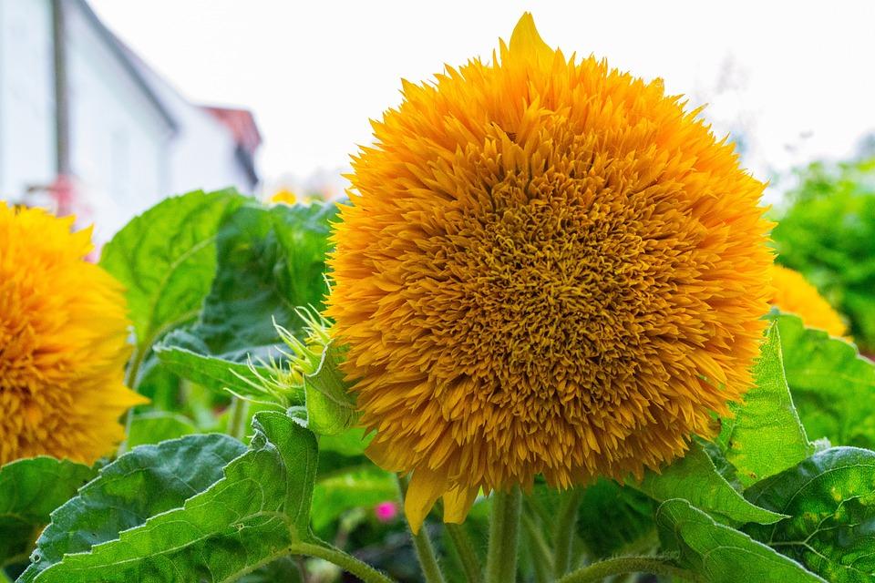 Blossom, Bloom, Close, Yellow