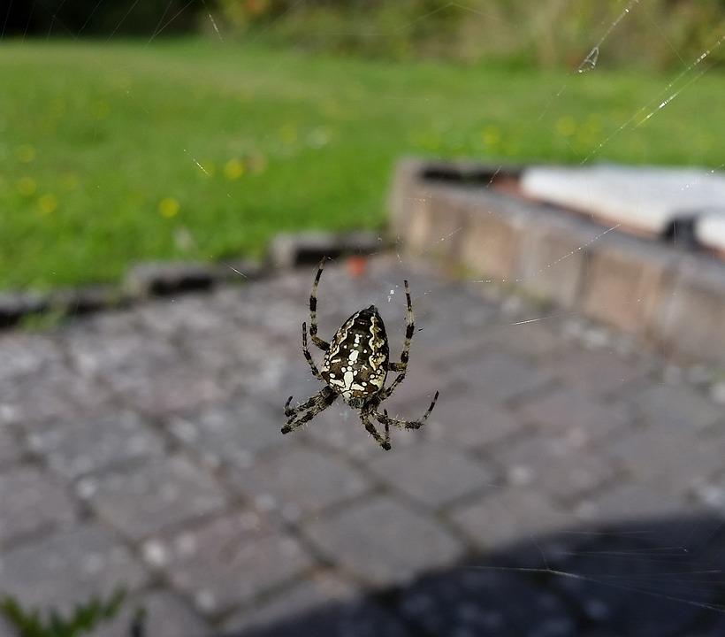 Spider, Close, Network, Cobweb, Yellow, Insect