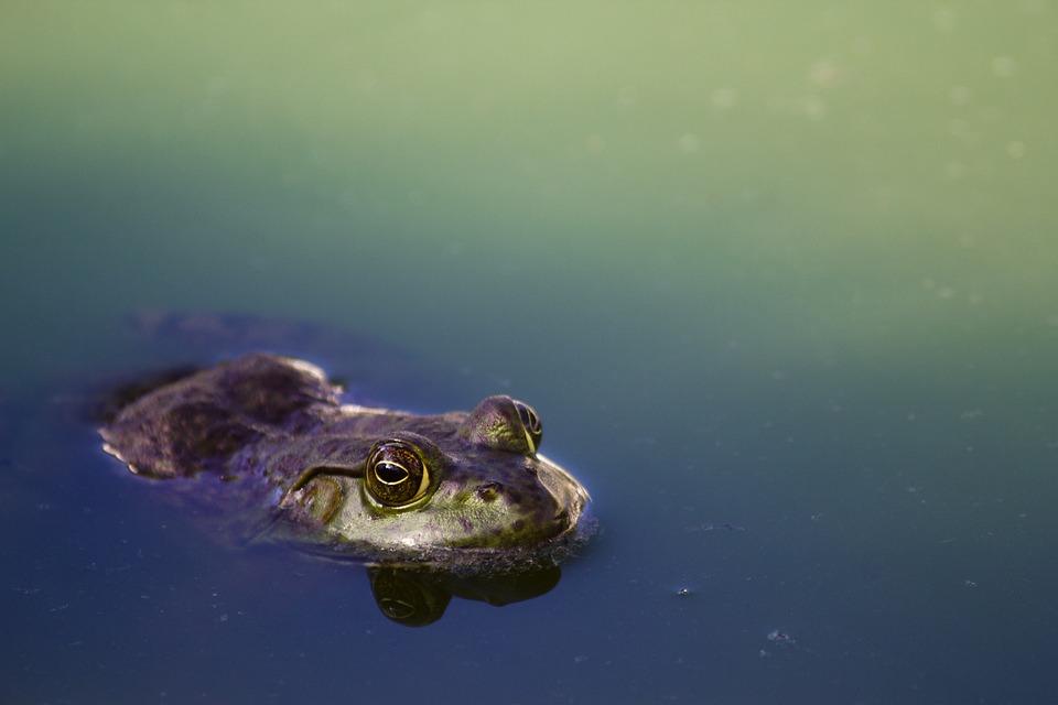 Amphibian, Animal, Animal Photography, Close-up