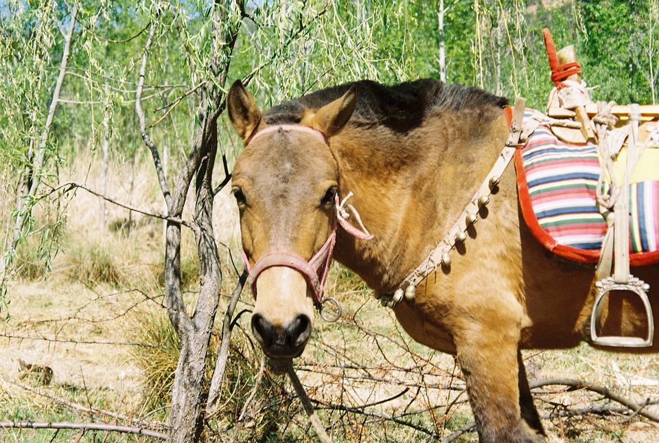 Horse, Animals, Natural, Animal, Close-up