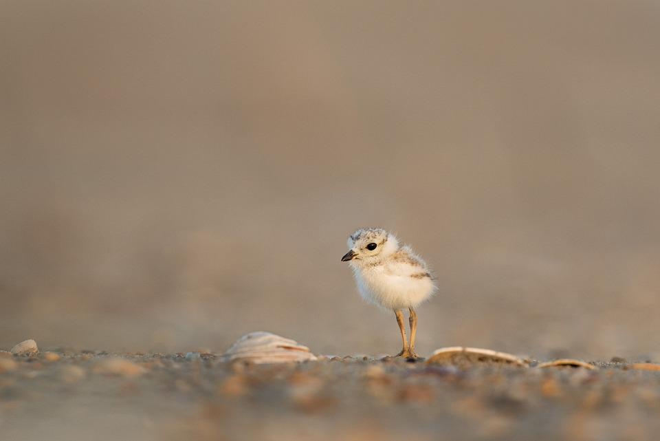 Animal, Avian, Beak, Bird, Blur, Chick, Close-up, Cute
