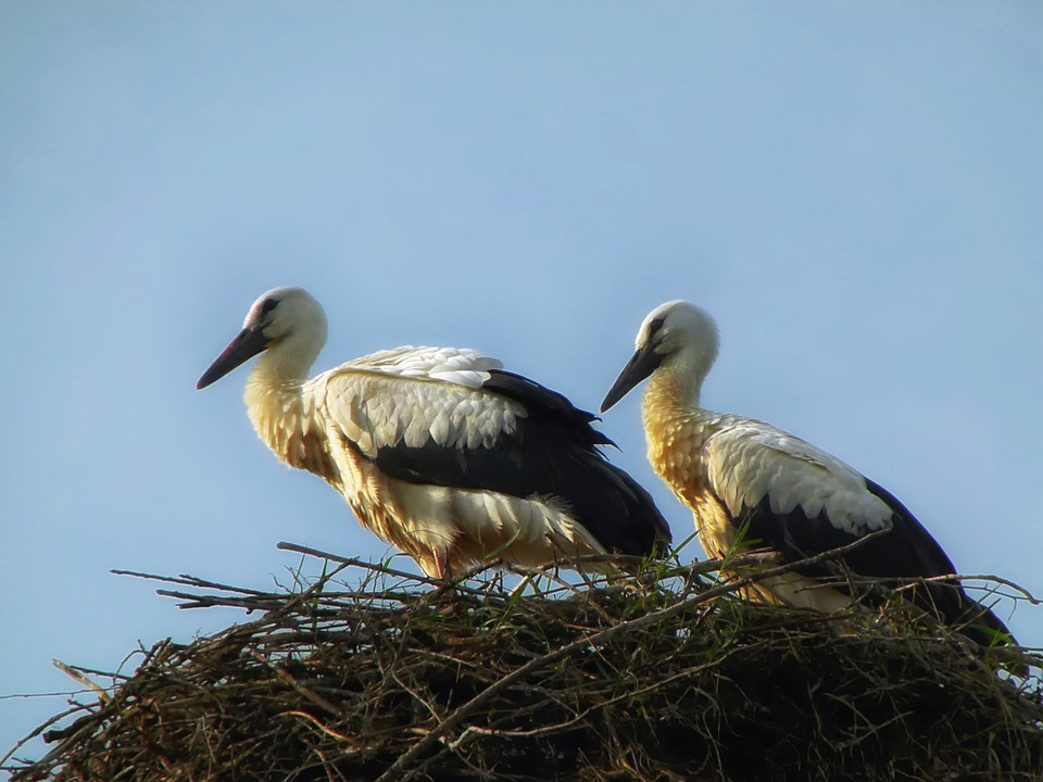 Storks, Birds, Nest, Macro, Close-up, Sky, Nesting