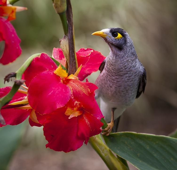 Bird, Bloom, Blossom, Close-up, Flora, Flowers, Nature
