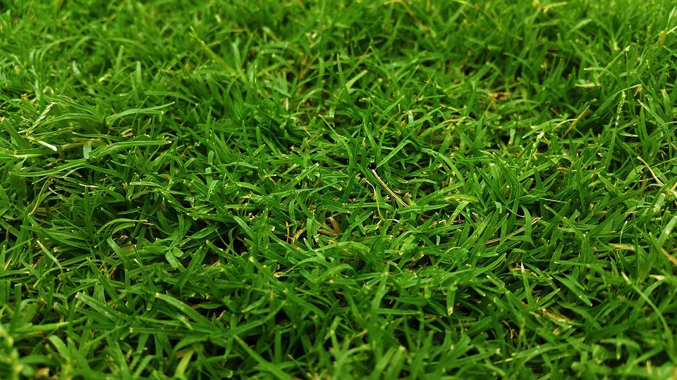 Close-up, Field, Grass, Grass Field, Grassy, Green
