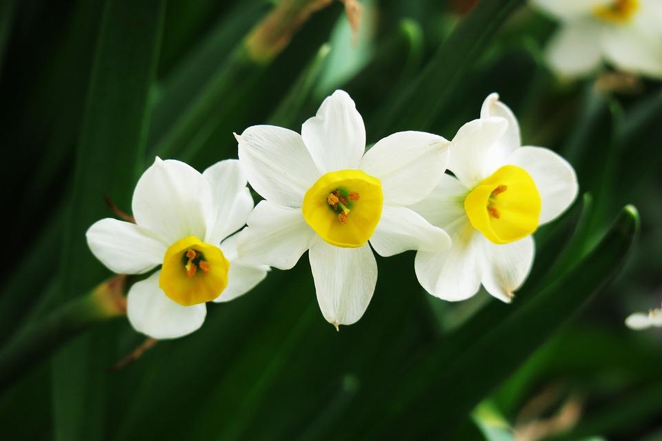 Flower, Nature, Plant, Garden, Close-up, Flower's