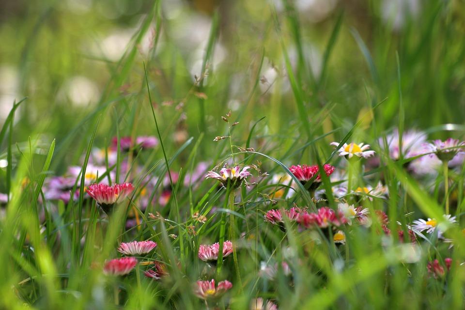 Flower, Grass, Meadow, Close-up