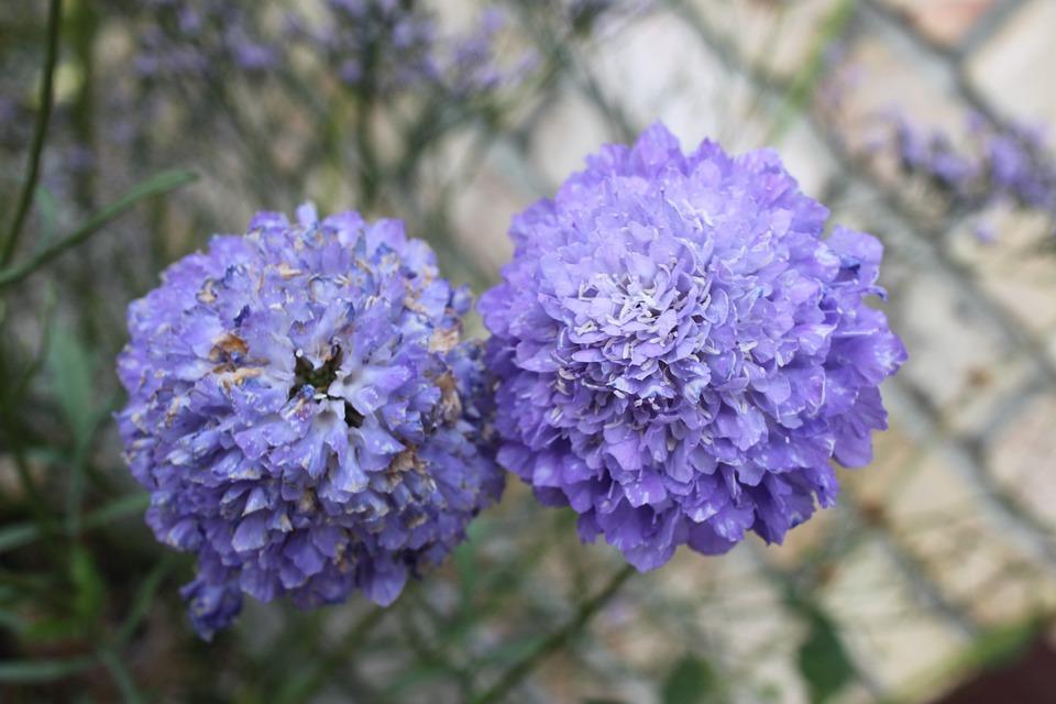 Purple, Flower, Close-up
