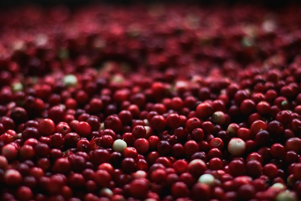 Berries, Cranberries, Close-up, Food, Fruits, Healthy