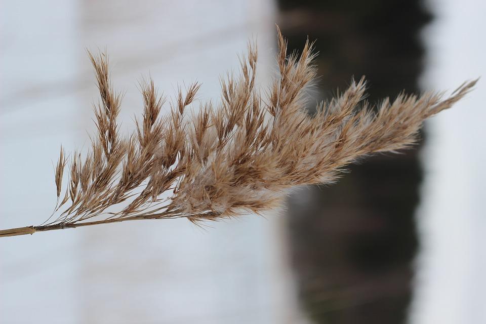 Nature, Close-up, Plant
