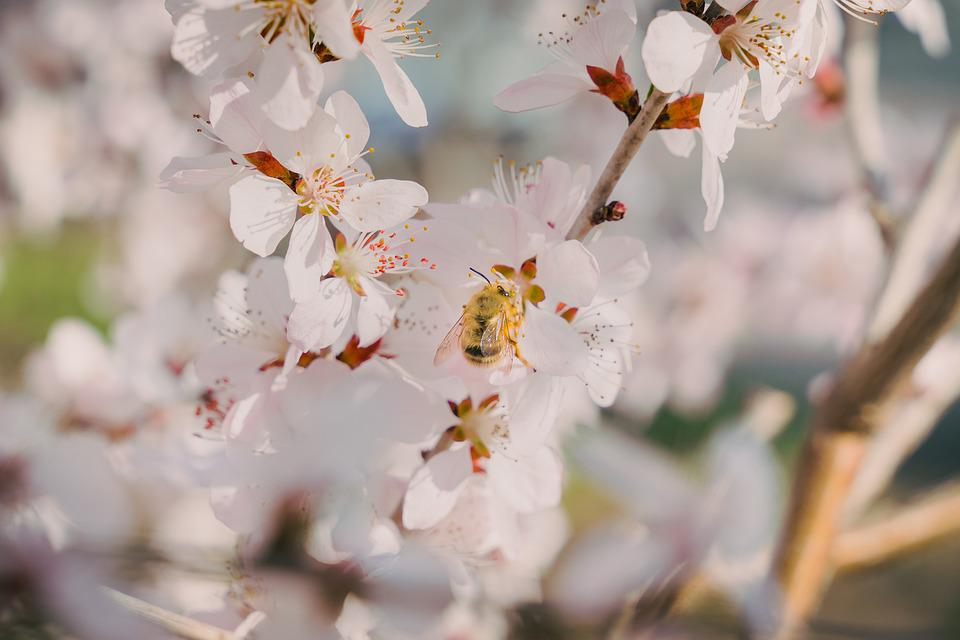 Spring, Close-up, Bee, Animal, Plant, Flower