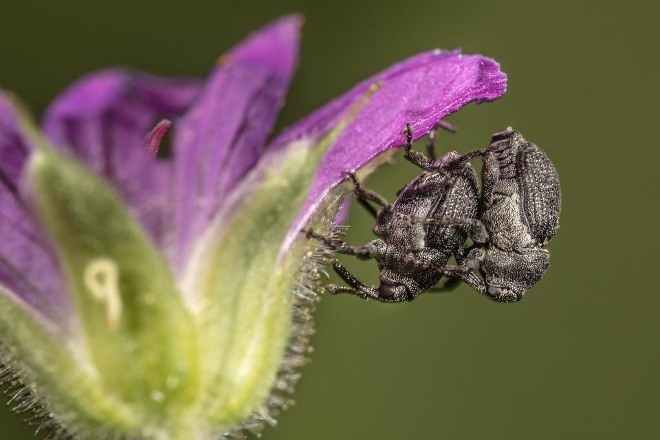 Closeup, Macro, Animals, Animal Life, Flower, Plant