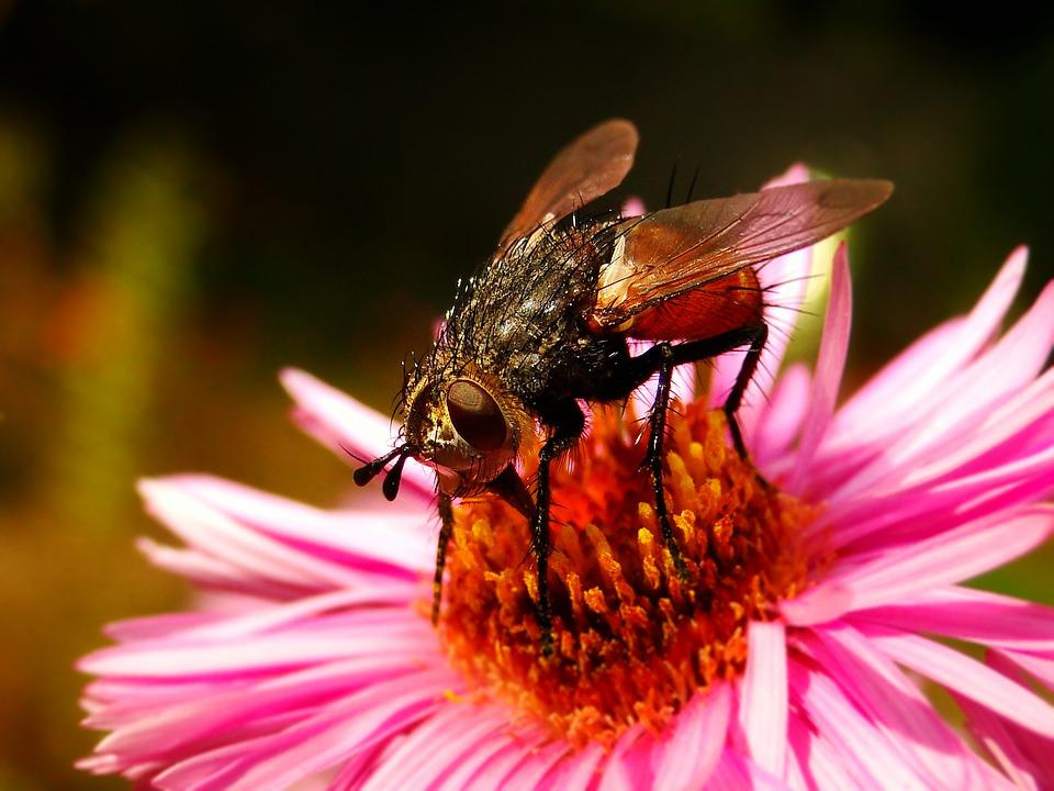 Insect, Nature, Apiformes, Flower, Closeup, Animals