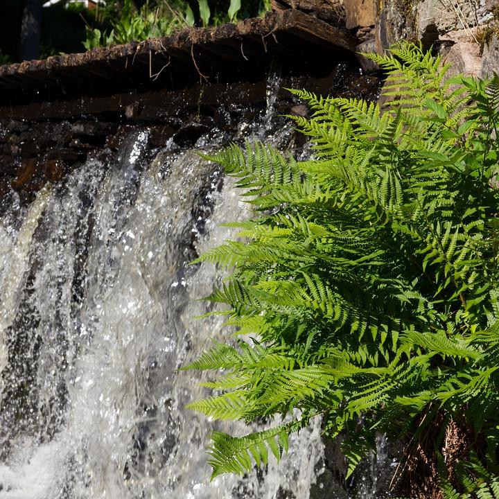 Waterfall, Greenery, Closeup