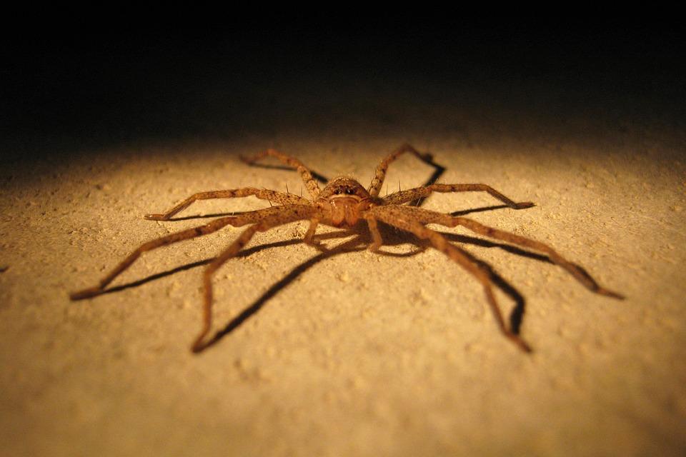 Spider, Insect, Pest, Bug, Closeup, Arachnid, Horror