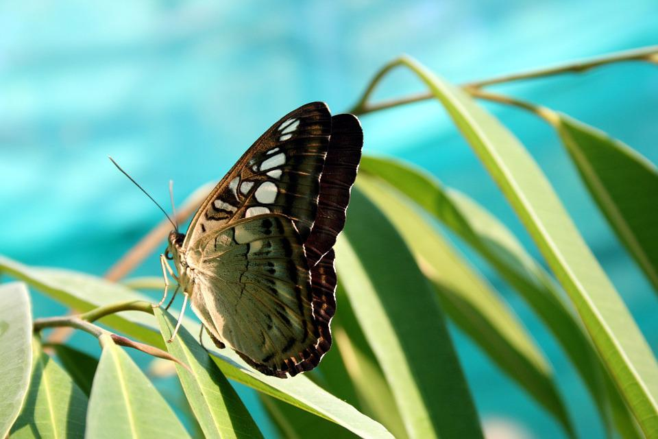 Butterfly, Nature, Insect, Closeup, Tropical Insects
