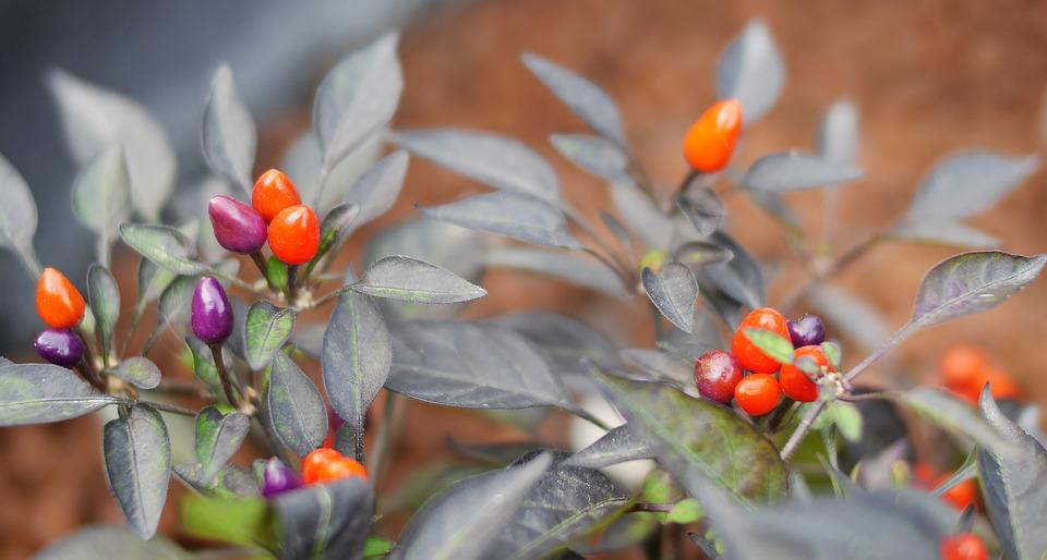 Nature, Leaf, Flora, Flower, Garden, Season, Closeup
