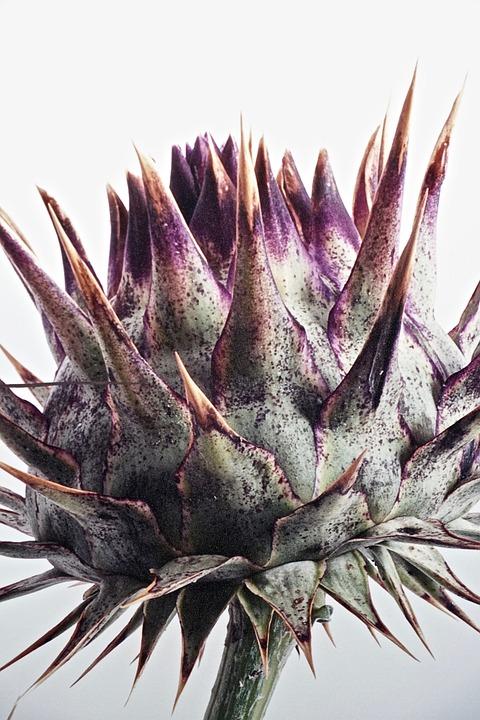 Artichoke, Vegetable, Nature, Closeup, Exotic