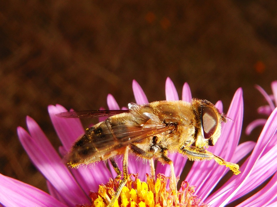Insect, Nature, Flower, Apiformes, Closeup, Animals