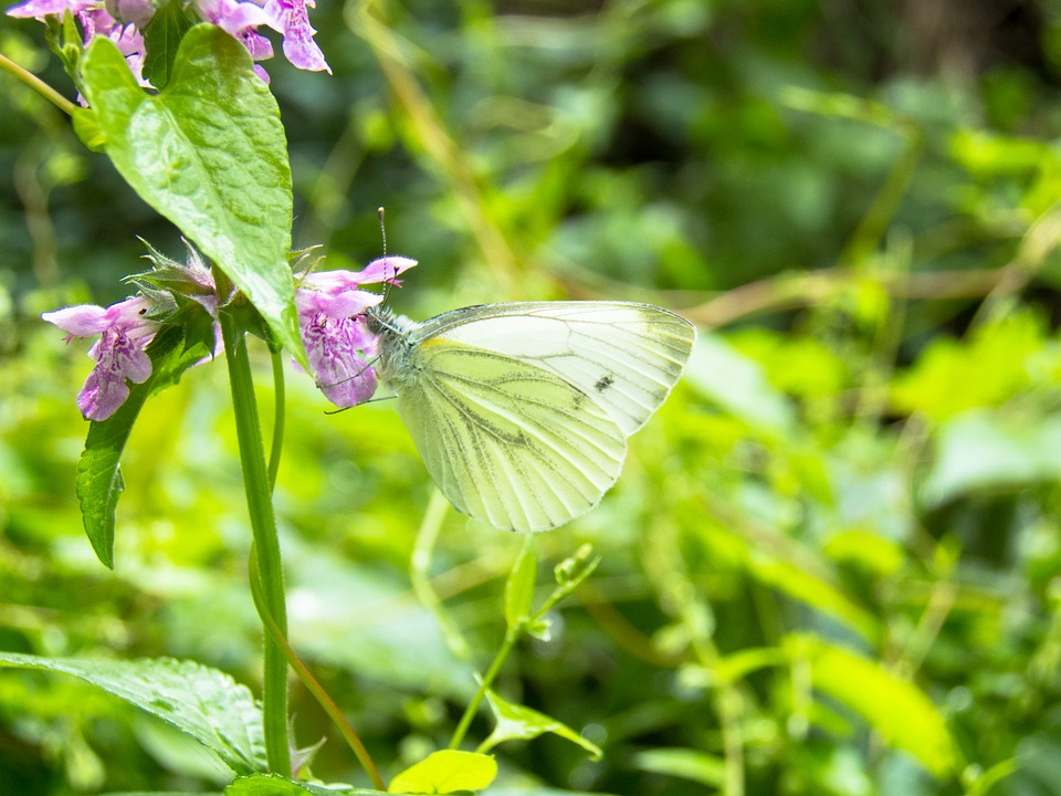 Butterfly, Closeup, Green, Nature, Flowers, Foliage