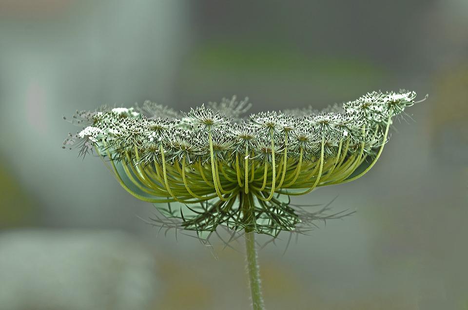 Nature, Outdoors, Closeup, Flora, Flower, Close