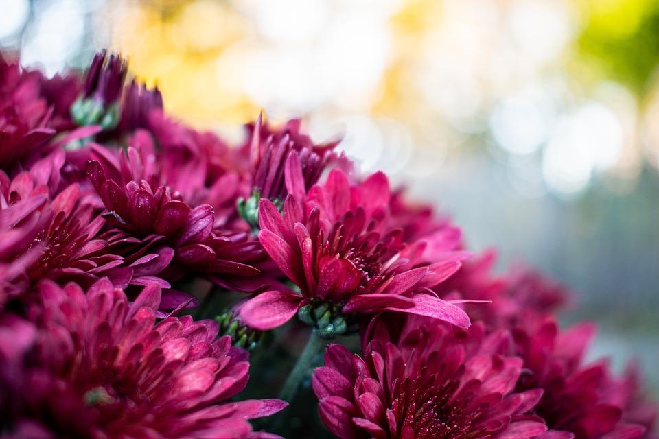 Pink, Red, Crimson, Closeup, Flowers, Nature, Spring