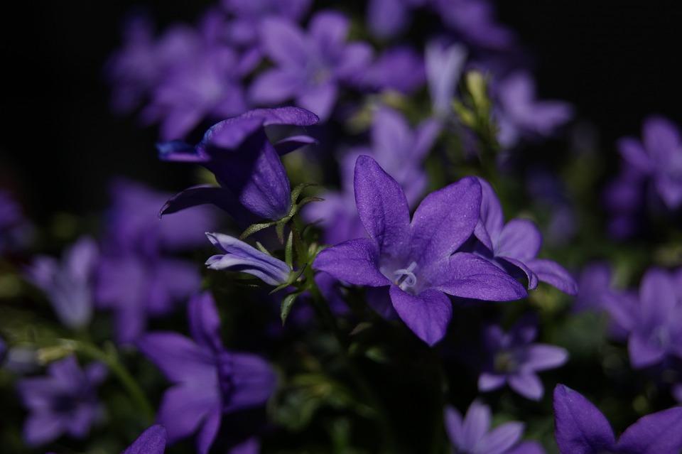 Flower, Plant, Nature, No One, Garden, Closeup, Macro