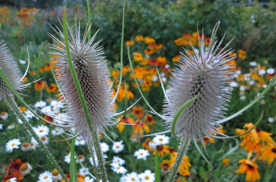 Plants, Closeup, Summer, Flower Bed