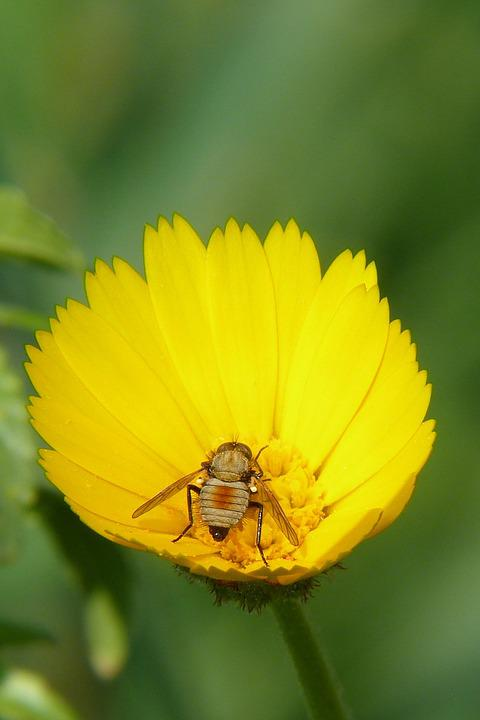 Nature, Plant, Flower, Summer, Closeup, Insect, Macro