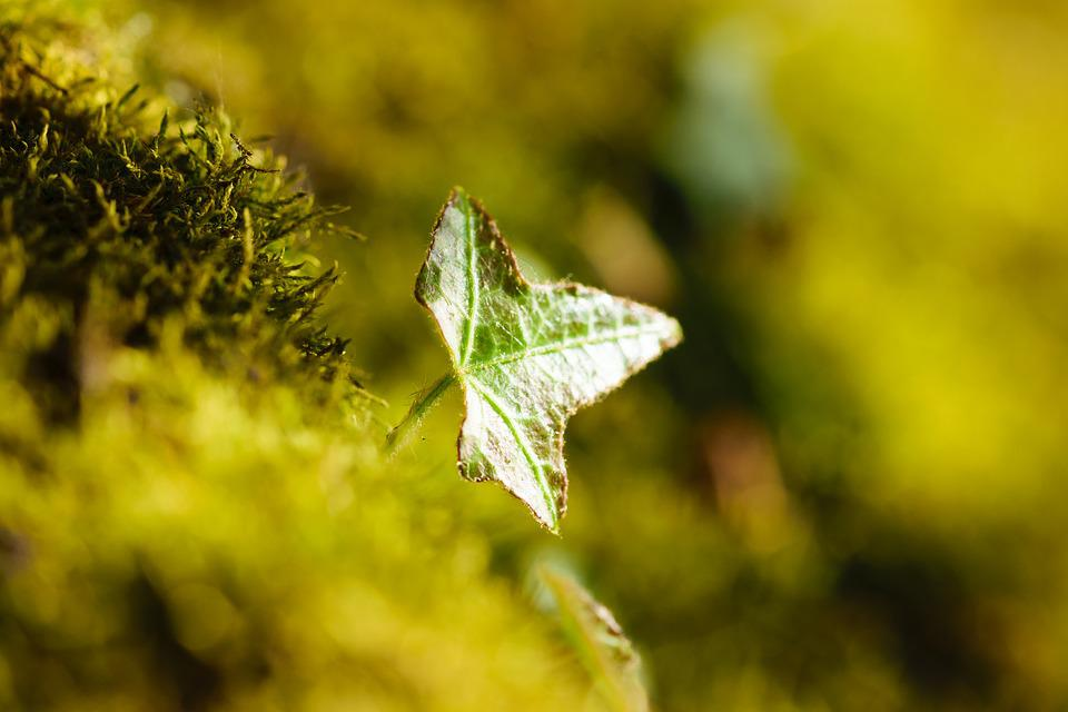 Outdoor, Closeup, Close, Close-up, Tree, Lichen