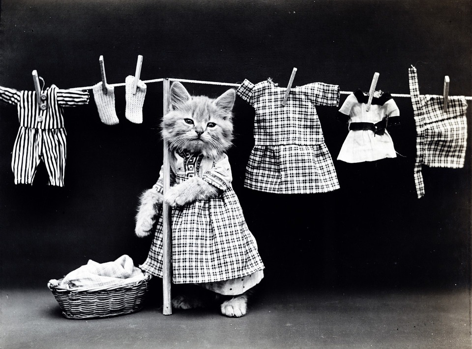 Cat, Kitten, Dressed, Clothed, Vintage, Photo, Cute