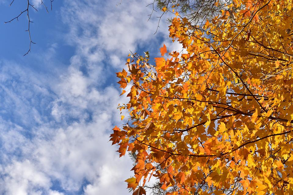 Sky, Cloud Clouds, Tree, Autumn, Nature, Fall, Leaves