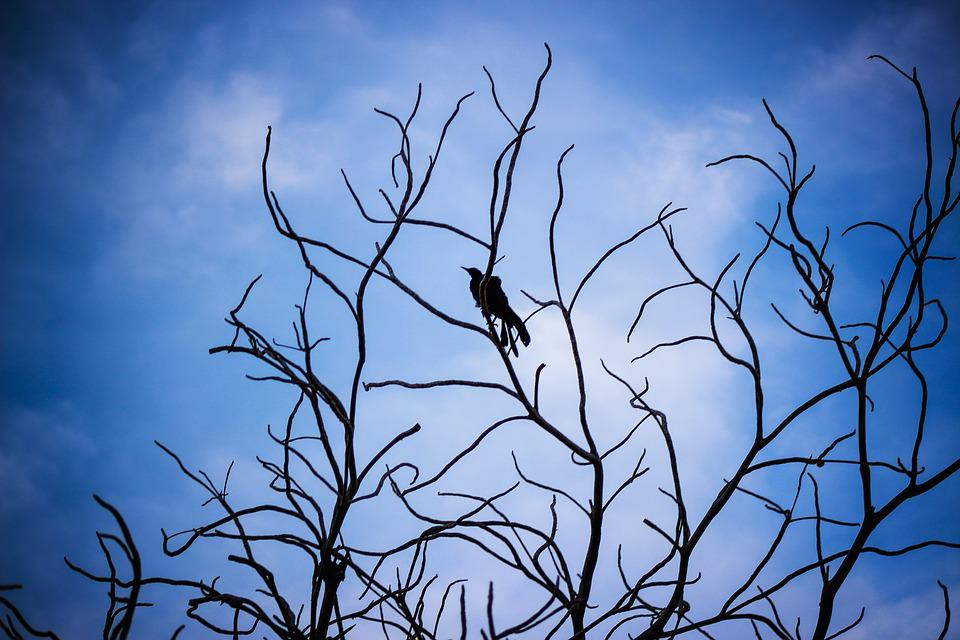 Sky, Blue, Bird, Nature, Wing, Freedom, Cloud, Natural