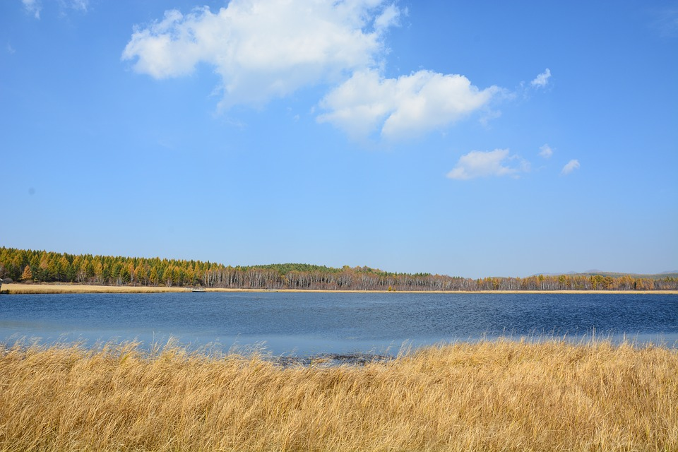 Autumn, Yellow, Grass, Mountain, Natural, Cloud, Forest
