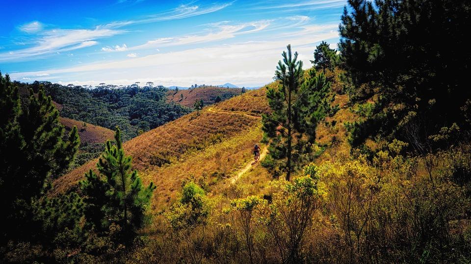 Mato, Trail, Forest, Hill, Sky, Cloud, Path, Vista