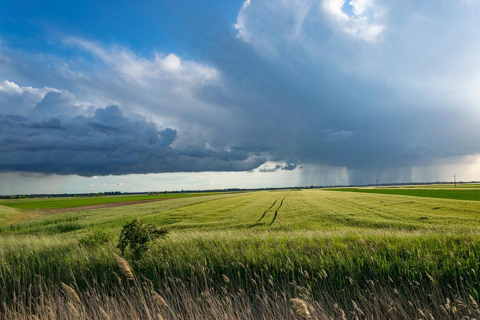 Storm, Cornfield, Clouds, Sky, Agriculture