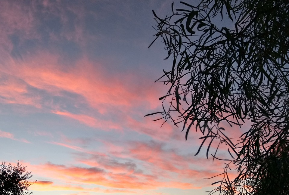 Background, Sunset, Pink, Clouds, Leaves, Silhouette