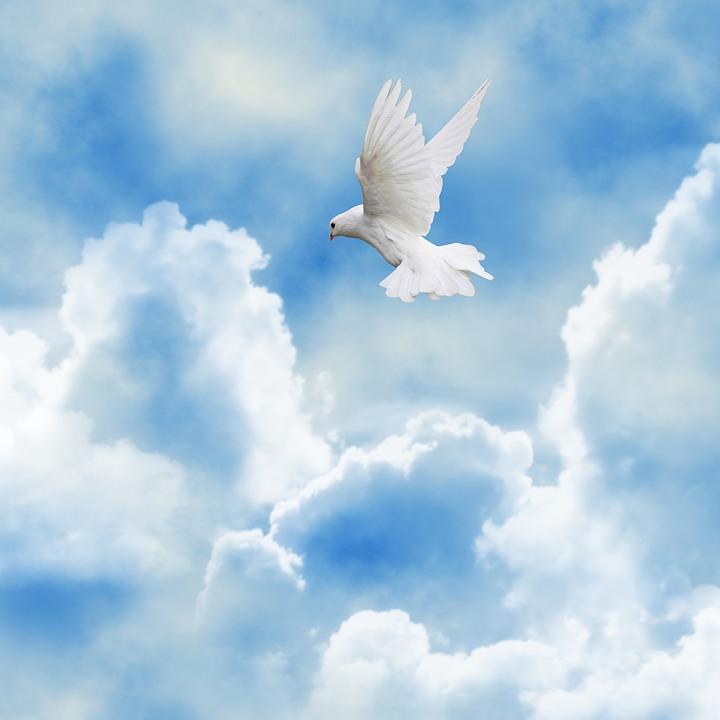Sky, Paloma, Bird, Ave, Clouds, Celeste, White